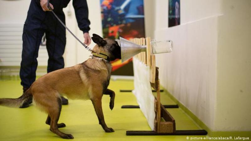 Чи можуть собаки розпізнати інфікованих коронавірусом