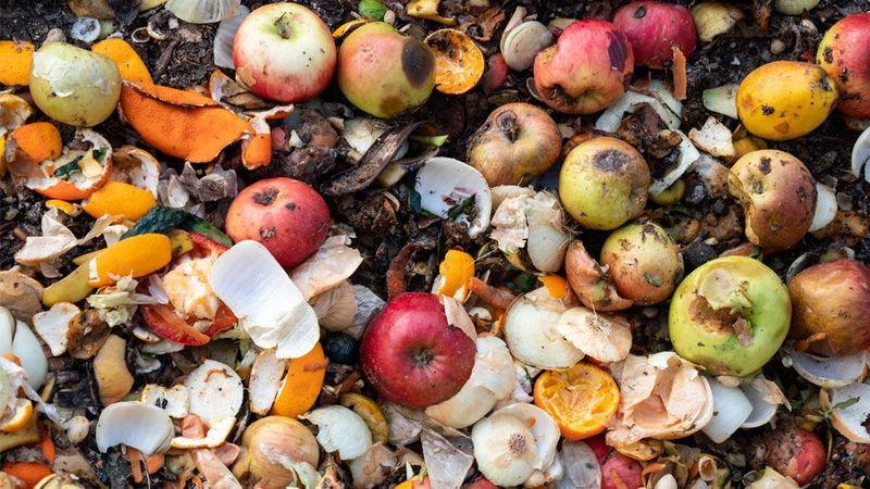 Щороку у світі викидають 900 млн тонн їжі — ООН