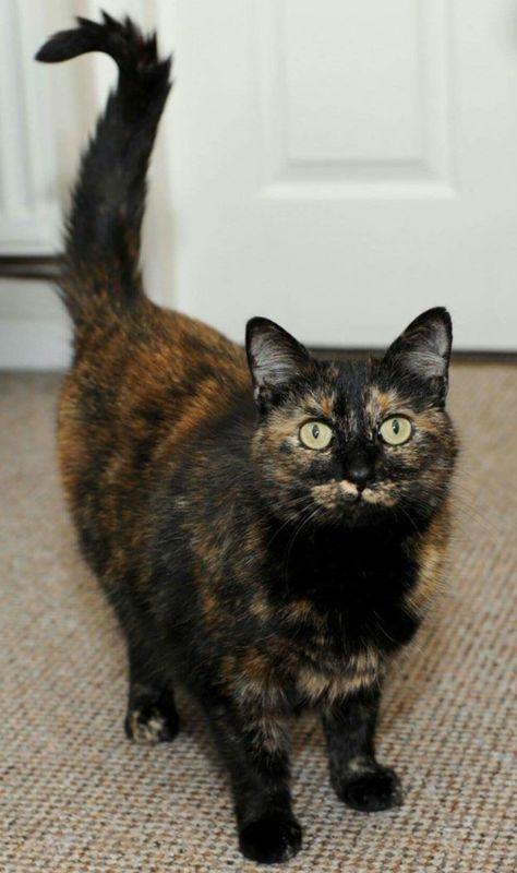 У Великій Британії обрали кішку року