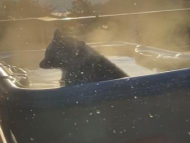 У Теннессі ведмідь пробрався у двір, щоб погрітися у джакузі. Відео