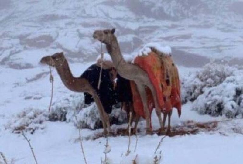 У Саудівській Аравії випав сніг. Відео