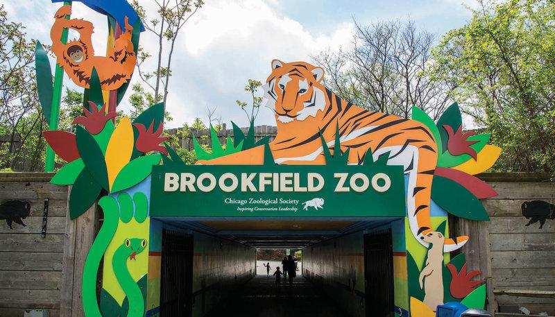 У зоопарку Брукфілд почали вакцинувати тварин
