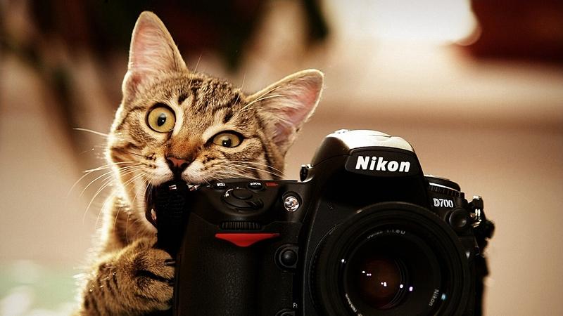 Триває прийом заявок на конкурс College Photographer of the Year