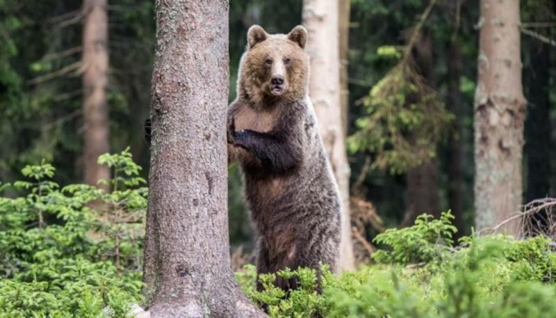 Жительку Іллінойсу засудили за небезпечне наближення до ведмедя у нацпарку