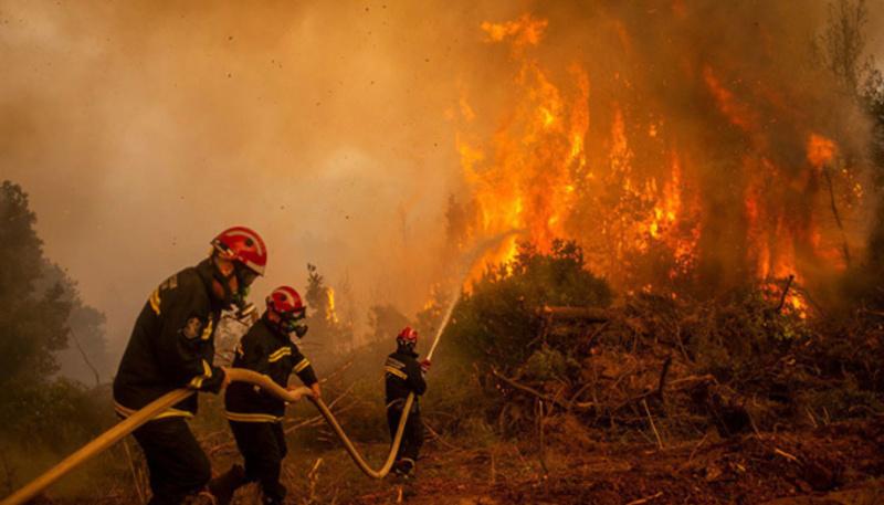 В Іспанії вогонь знищив майже 1000 гектарів лісу - підозрюють підпал