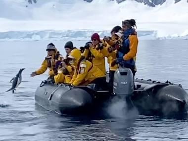 Пінгвін заскочив у човен до туристів, втікаючи від косатки. Відео