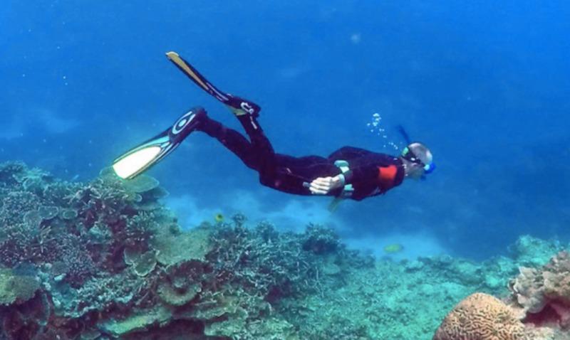 Глобальне потепління вбиває Великий Бар'єрний риф