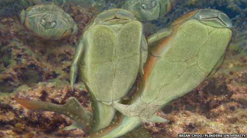 На думку вчених риби першими на Землі практикували секс