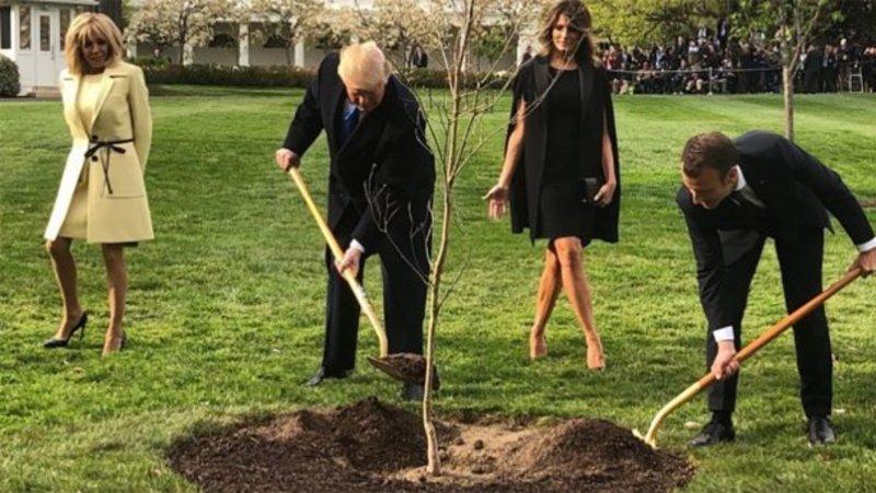 Макрон і Трамп посадили дерево дружби, а воно загинуло