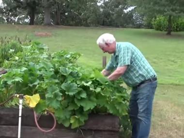 Чоловік посадив загадкове насіння з Китаю