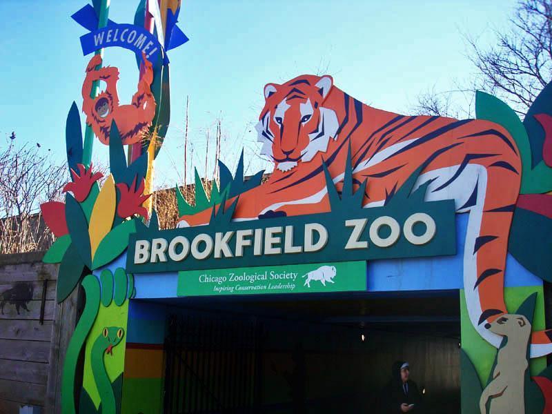 Brookfield Zoo відновлює свою роботу - відомі дати