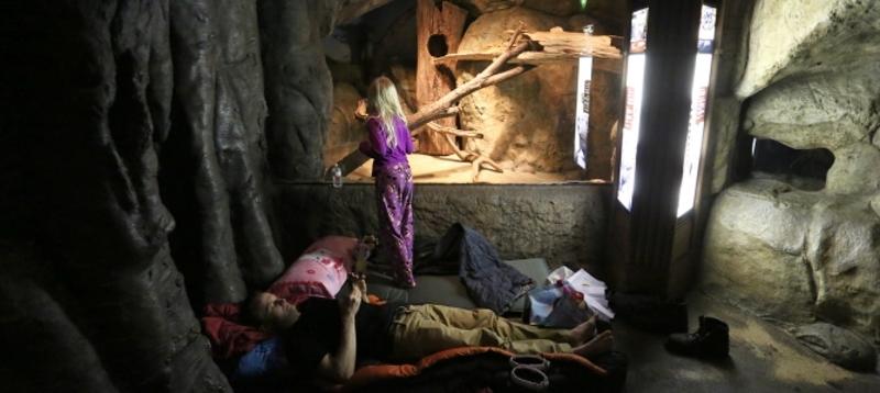 Lincoln Park  Zoo запрошує на екскурсію та ночівлею поряд з тваринами