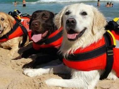 В Італії собаки врятували 14 людей, яких течією віднесло у море