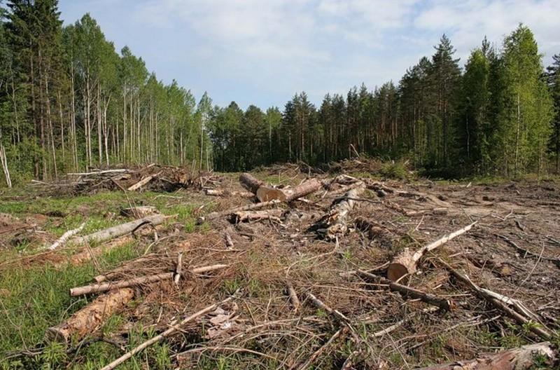 Українці закликають Порошенка не продавати карпатські ліси